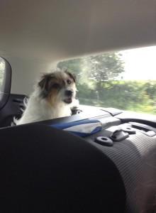 My Jack Russell Terrier, Poppy.